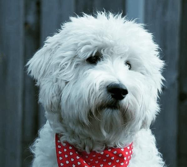 leukste huisdierenfoto